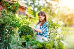Härligt arbeta i trädgården för ung kvinna Arkivfoto