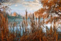 Härligt auroral höstlandskap royaltyfri foto