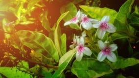 Härligt av blomman Royaltyfri Bild