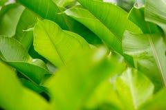 Härligt av grön bladbakgrund arkivbild