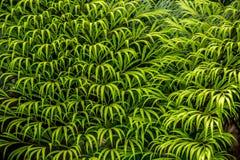 Härligt av grön bladbakgrund arkivfoto