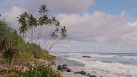 Härligt bakgrundsskott av idylliska palmträd på att förbluffa havsemesterortstranden, skummande vita vågor och solig sommarhimmel stock video