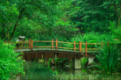 Härligt bambuhav Arkivfoton