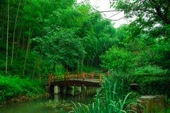 Härligt bambuhav royaltyfri bild