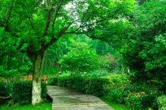 Härligt bambuhav arkivfoto