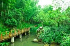 Härligt bambuhav fotografering för bildbyråer