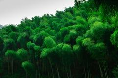 Härligt bambuhav royaltyfri foto