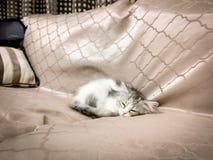 Härligt behandla som ett barn den vita katten som hemma sover royaltyfria bilder