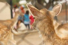 Härligt behandla som ett barn hjortar från baksida Royaltyfri Foto
