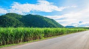 Härligt berg med vägen Berg med den gröna växten Fotografering för Bildbyråer