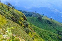 Härligt berg på Doi inthanon, Chiang Mai, Thailand Royaltyfri Fotografi