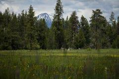 Härligt berg till och med träden royaltyfria foton