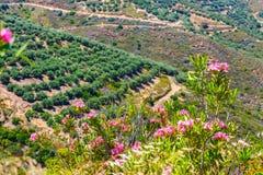 Härligt berglandskap av Kreta, Grekland Royaltyfri Foto