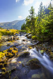 Härligt berglandskap i de Transylvanian fjällängarna i sommar Arkivfoton