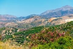 Härligt berglandskap med den olivgröna kolonin, Kreta Royaltyfri Foto