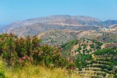 Härligt berglandskap med den olivgröna kolonin, Kreta Royaltyfri Fotografi