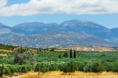 Härligt berglandskap med den olivgröna kolonin, Kreta Royaltyfria Foton