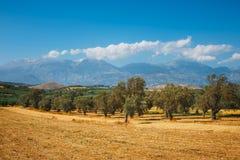 Härligt berglandskap med den olivgröna kolonin, Kreta Royaltyfri Bild