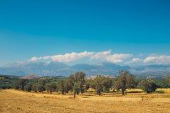 Härligt berglandskap med den olivgröna kolonin, Kreta Arkivbild