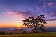 Härligt berglandskap med det ensamma trädet på gryning Royaltyfria Bilder