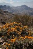 Andes berg Royaltyfri Foto