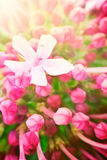 härligt blom- för abstrakt bakgrund Arkivfoto