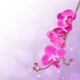 härligt blom- för abstrakt bakgrund Royaltyfria Foton