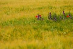 härligt blom- för bakgrund Royaltyfria Foton