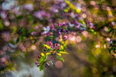 Härligt blomma för vår arkivfoton
