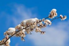Blommor i snowen Arkivbilder