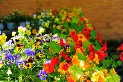 härligt blommaleende Arkivfoton