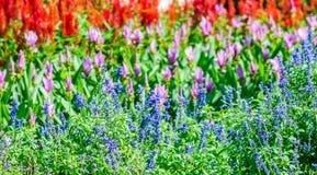 Härligt blomstra för blommor arkivfoton