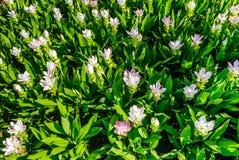 Härligt blomstra för blommor arkivbild