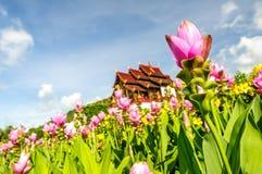 Härligt blomstra för blommor arkivbilder