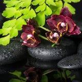 Härligt brunnsortbegrepp av den djupa körsbärsröda orkidén (phalaenopsis), gree Arkivfoto