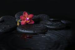 Härligt brunnsortbegrepp av djupt - den purpurfärgade orkidén (phalaenopsis) royaltyfri fotografi