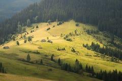 Härligt carpathian naturlandskap och övergav wood logar arkivfoton