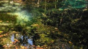Härligt damm i skogen Lacul Ochiul Beiulu arkivbild