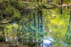 Härligt damm i skogen Lacul Ochiul Beiulu arkivfoto