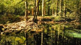 Härligt damm i skogen Lacul Ochiul Beiulu royaltyfria bilder