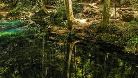 Härligt damm i skogen Lacul Ochiul Beiulu royaltyfri foto