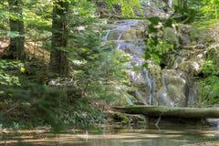 Härligt damm i skogen Lacul Ochiul Beiulu fotografering för bildbyråer