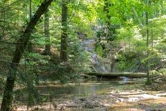 Härligt damm i skogen Lacul Ochiul Beiulu royaltyfri fotografi
