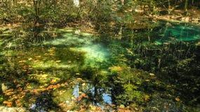 Härligt damm i skogen Lacul Ochiul Beiulu royaltyfri bild