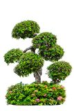 härligt dekorativt träd som isoleras på vit Arkivfoto