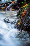 Härligt detaljslut upp av den mjuka floden för silkeslen slät satäng som flödar i livliga selektiva färger för skognedgång royaltyfri foto