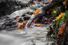 Härligt detaljslut upp av den mjuka floden för silkeslen slät satäng som flödar i livliga selektiva färger för skognedgång arkivbild