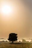 Härligt dimmigt landskap Arkivfoto