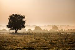 Härligt dimmigt landskap Arkivfoton