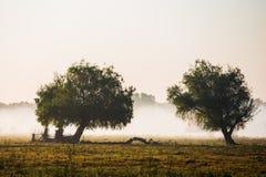 Härligt dimmigt landskap Arkivbilder
